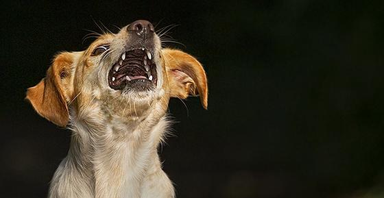 CANIS-Artikel über Ängste bei Hunden