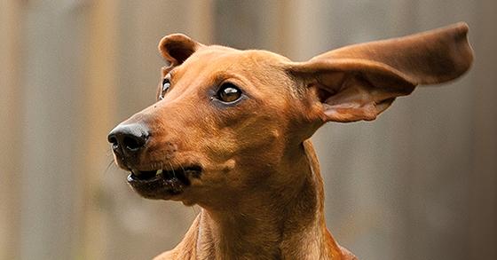 CANIS-Artikel Stress beim Hund